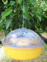 Κίτρινες οικολογικές παγίδες για επιβλαβή έντομα