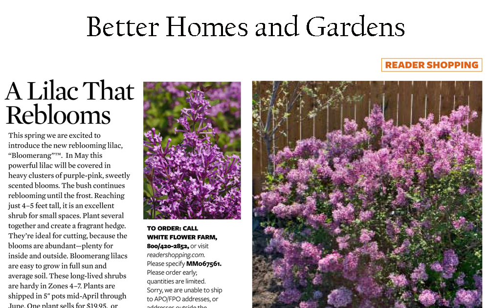 The Plant Hunter Bloomerang Lilac Starts A Controversy