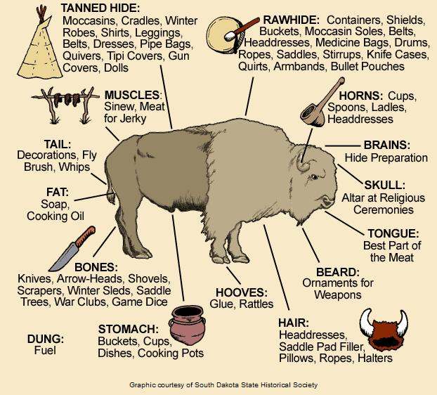 An infographic showing the versatility of bison and how Native Americans used the meat, bones, and hide.