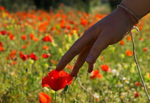 hand touching flower