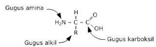 asam amino