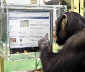 chimp facebook