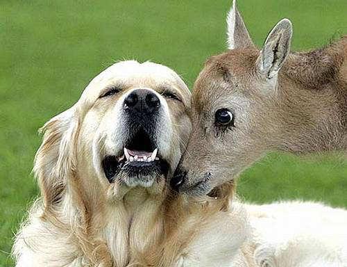 Cute Animals Best Friends