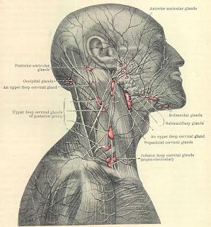 Posterior Auricular Nodes