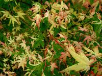 Rare Plant Species Rijetke Biljne Vrste Rare Plant Species