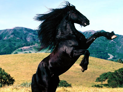 wallpapers free horse