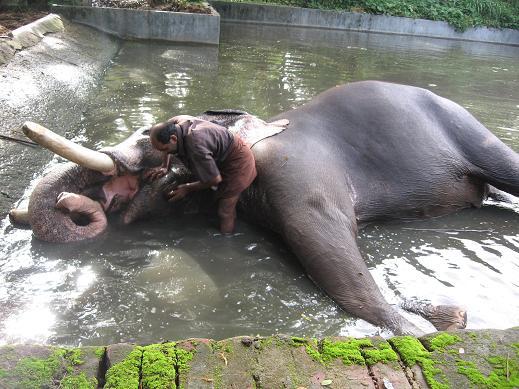 Indian Columbus: Punnathur Kotta Elephant Sanctuary ...