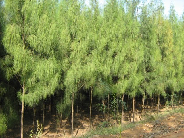 Agroforestry - A blog on Agrihortisilviculture: Tips to