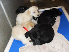 4/16/10   Many Puppies in KY Shelter Need Rescues or Will Be Put Down :(