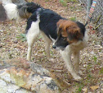12/28/09 Beautiful Lucy is Urgent