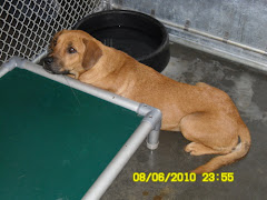 "8/21/10 Robeson County Animal Shelter St. Pauls, N C. Lots of dogs and cats need out.""Id# 43825"