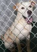 RESCUE/SPONSOR/ADOPT: Barnesville, GA~97% Euth Rate- Beautiful dogs, pups & kitties out of time!