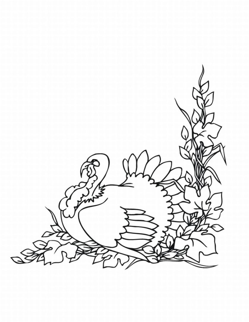 Turkey Coloring Pages, Thanksgiving Turkeys Coloring ...