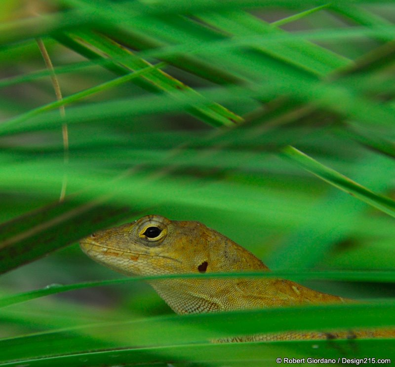 Lizard in the grass
