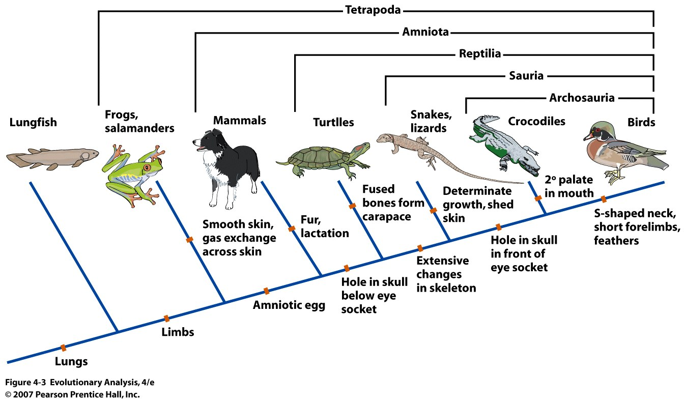 Evolutiebiologie Promise Promise