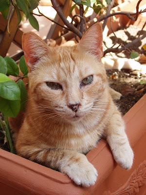 gatto ergo sum: maggio 2010