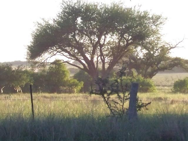 amanecer en Naicó, La Pampa