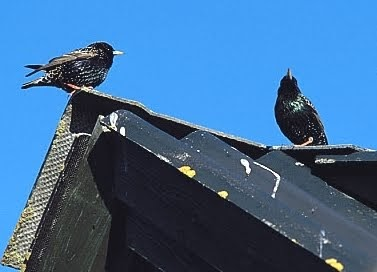 The Pest Advice What Is The Scratching I Hear In My Roof