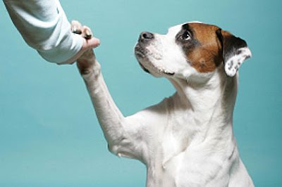 dog shake hand handshake