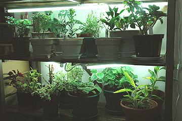 Sage Gardener Setting Up Indoor Grow Lights