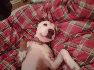 The Real Pit Bull Blog: 2011