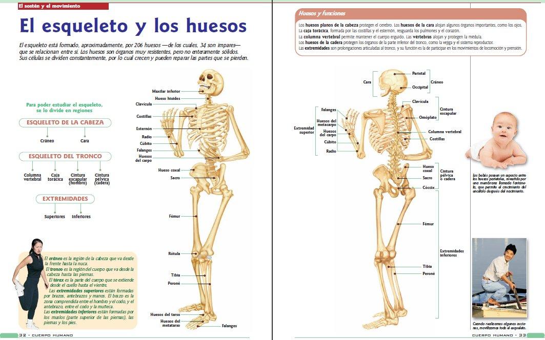 Fisiologia Humana Tresguerres Descargar Pdf