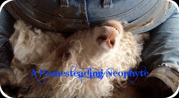 A Homesteading Neophyte