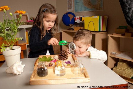NAMC montessori classroom art of observation sensitive periods productivity examining pinecone