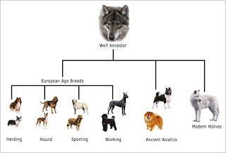 Amanda's Biology Blog: Artificial Selection: Leave well