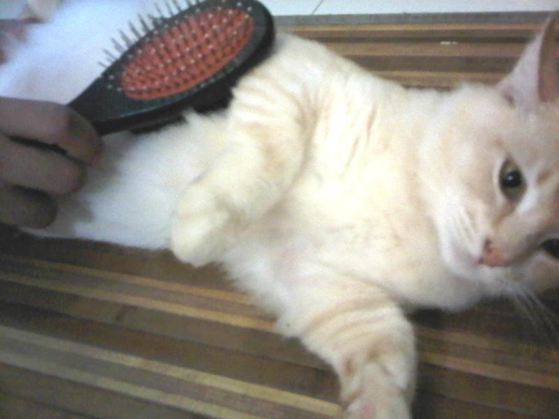 My Dearcats Dc Jenis Jenis Sikat Dan Berus Kucing