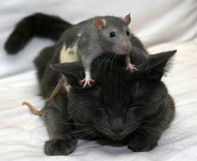 Dennys Funny Quotes: Funny Odd Couples: Cats And Their