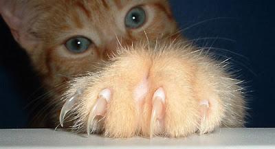Surabaya Cat Lover Panduan Memotong Kuku Kucing