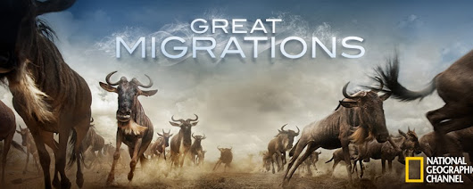 Great Migrations (2010) HD