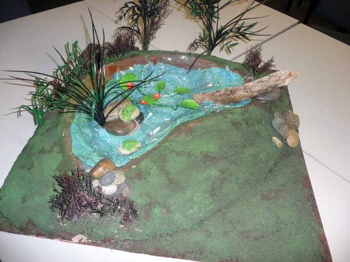 Toadally Awesome Toad Facts: Making a frog pond model!
