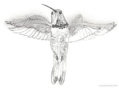 Haiku Bird Hummingbird In Flight Original Pencil Sketch