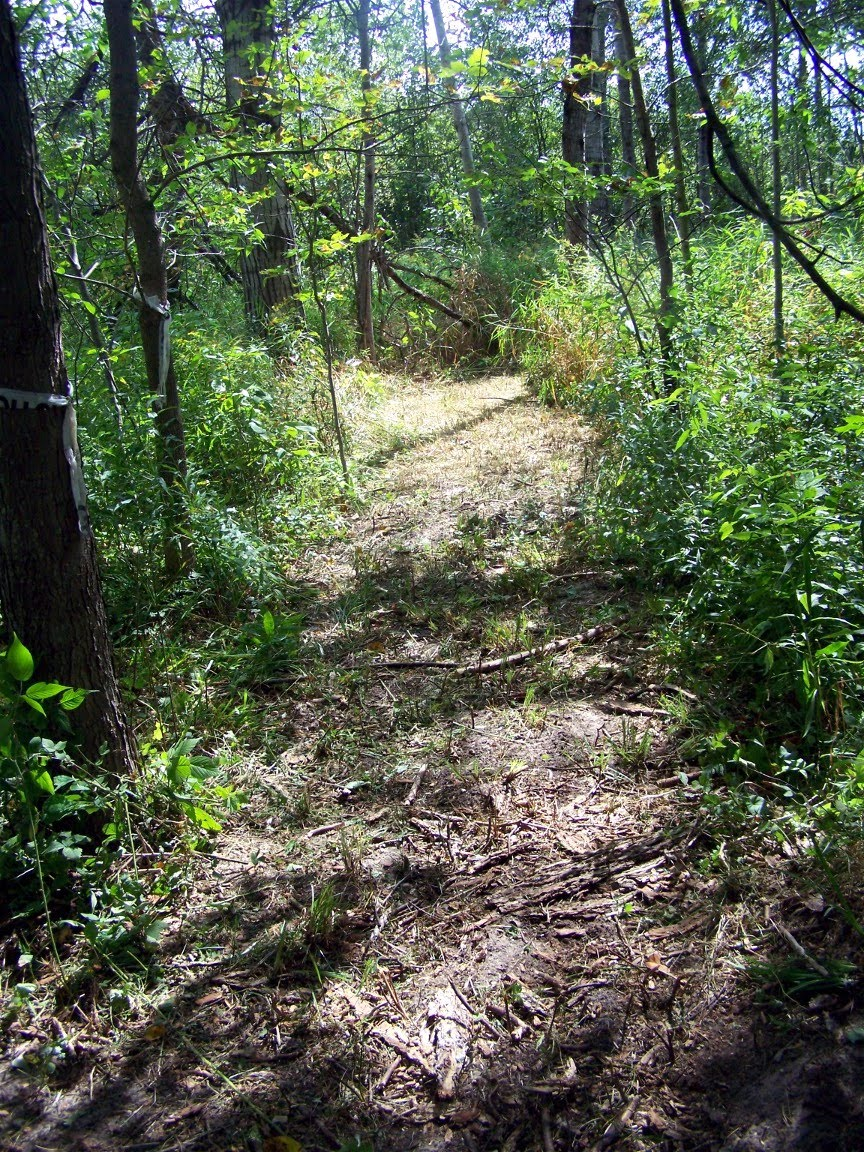 The Woods Wood Be Quiet If No Birds Sang Except The Best: Restful Trails Food Forest Garden: Trails Through The