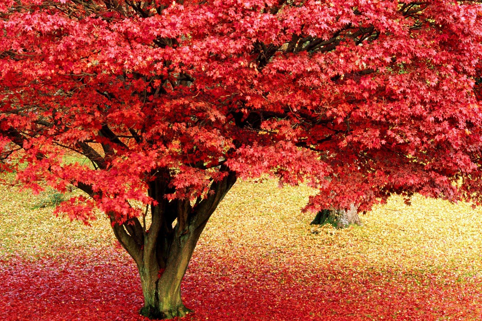 Autumn Ladscape Desktop Picture