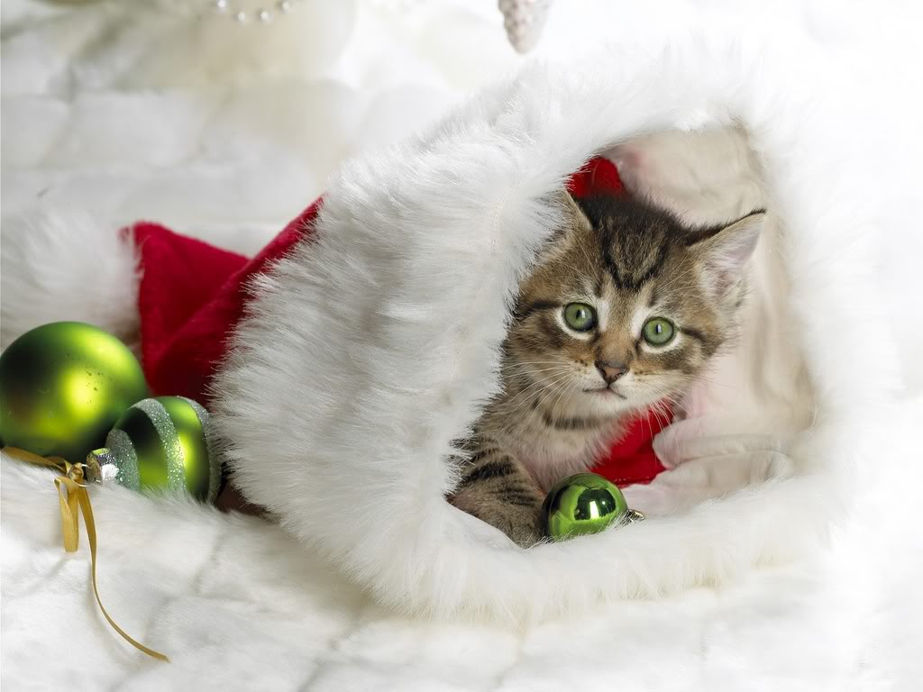 Cute christmas cats pictures free christian wallpapers for Christmas pictures of baby animals
