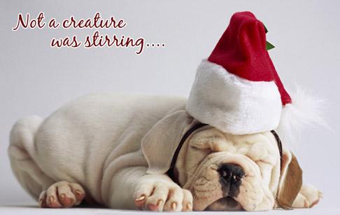 christmas puppy wallpaper - photo #35
