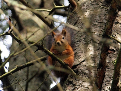 ekorre squirrel photo by Maria-Thérèse Anderson