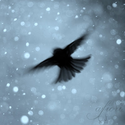 Flying bird blue sky bokeh winter snowflakes Maria-Thérèse Andersson afiori fine art photography Etsy konstfoto nature photography naturfoto