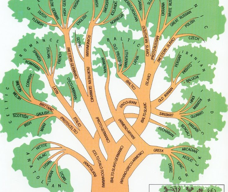 Example Of Family Tree Diagram Chevy 350 Distributor Wiring Language Continuity: Trees: What Are They Good For?