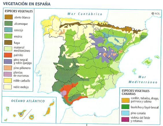 Resultado de imagen de MAPA FORMACIONES VEGETALES ESPAÑA