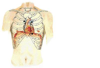 dagram of the human heart