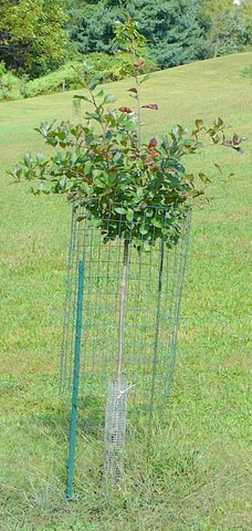Deer Country 7 Protecting Shrubs Trees With Fencing