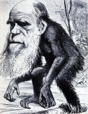darwin monyet