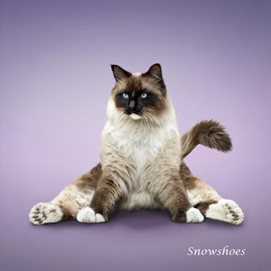yoga cats 2010 calendardan borris and wife  weird and
