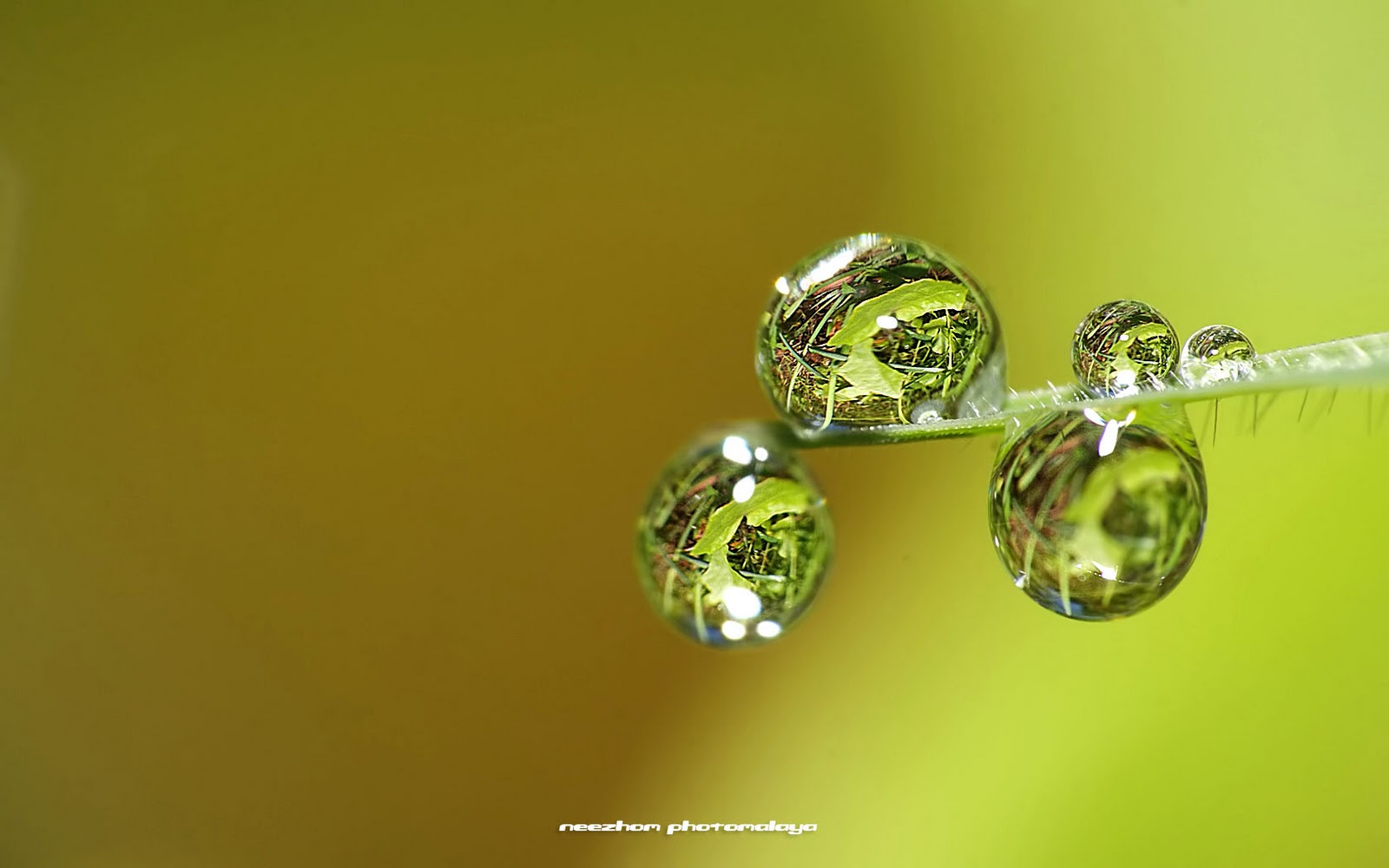 Top and bottom water drops with refraction