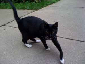 Found Cat 1443 Winnemac - Edgeville Buzz