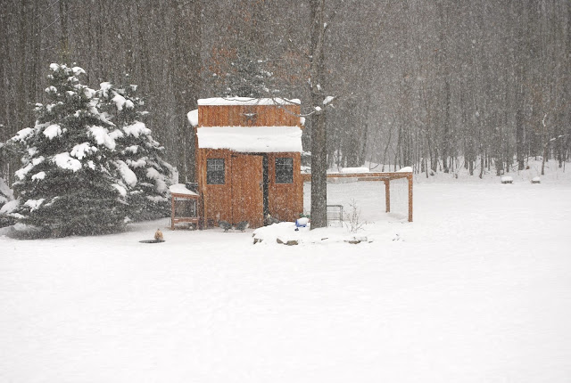 frozen chicken duck coop